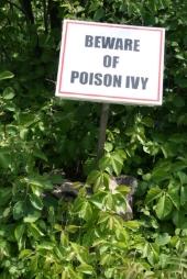 Poison Ivy Image de Shutterstock