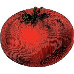 rotten-tomato-150