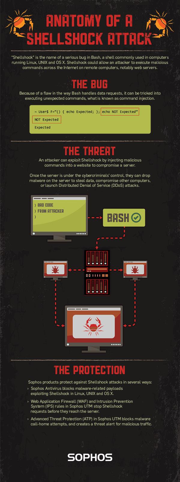 Sophos Bash Shellshock Infographic web plus size