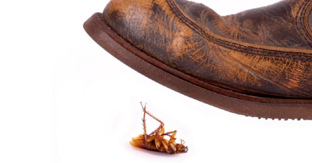 bug-bounty-google