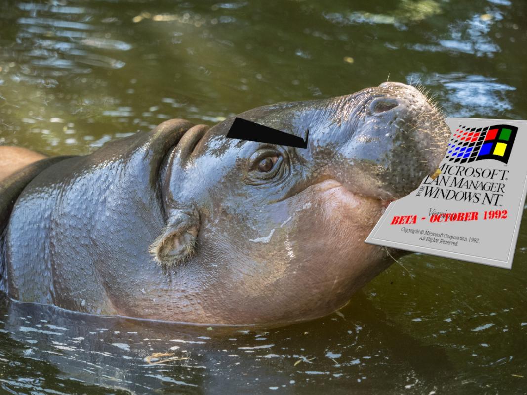 Pygmy Hippopotamus, photo by William Warby (https://www.flickr.com/photos/wwarby/19446821910)